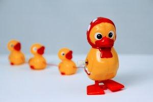 Wills legal duck